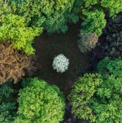 single white tree