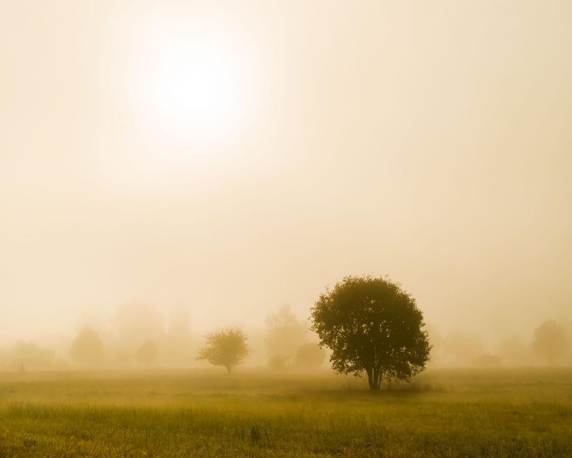 02_Nebelbäume-4