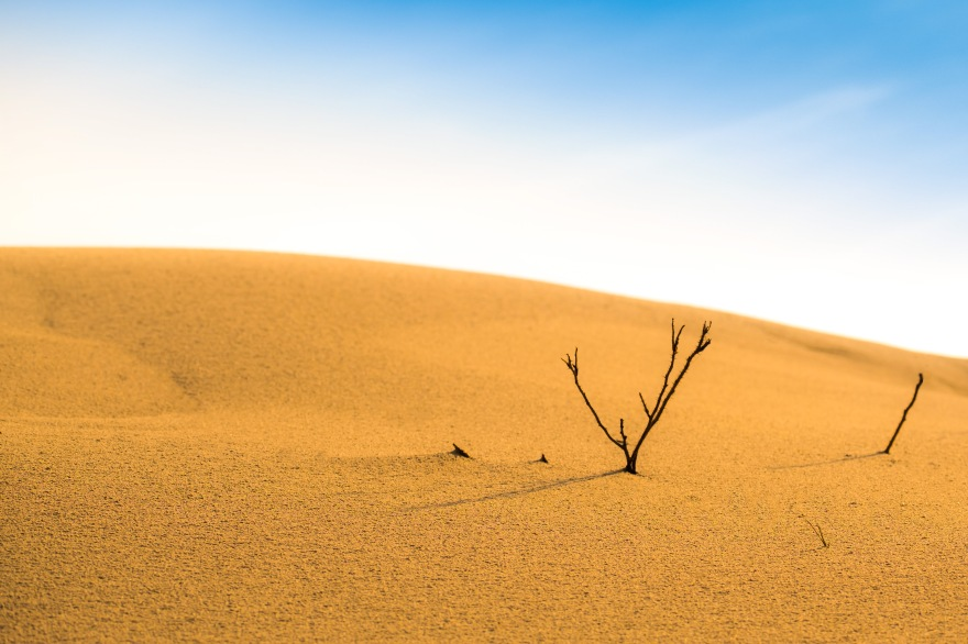 Heligoland_Dune