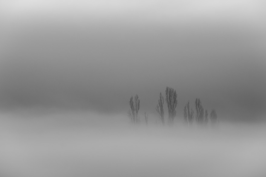 trees-in-mist-4