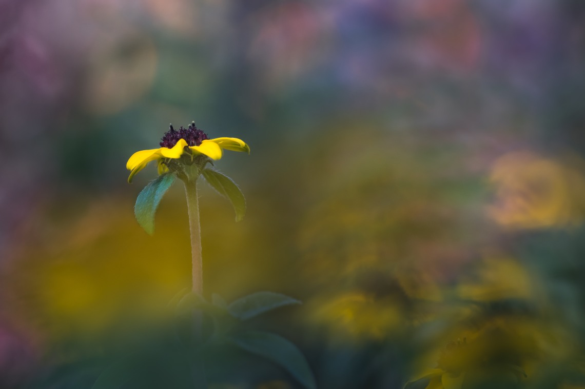 yellow flower surrounded by more colours