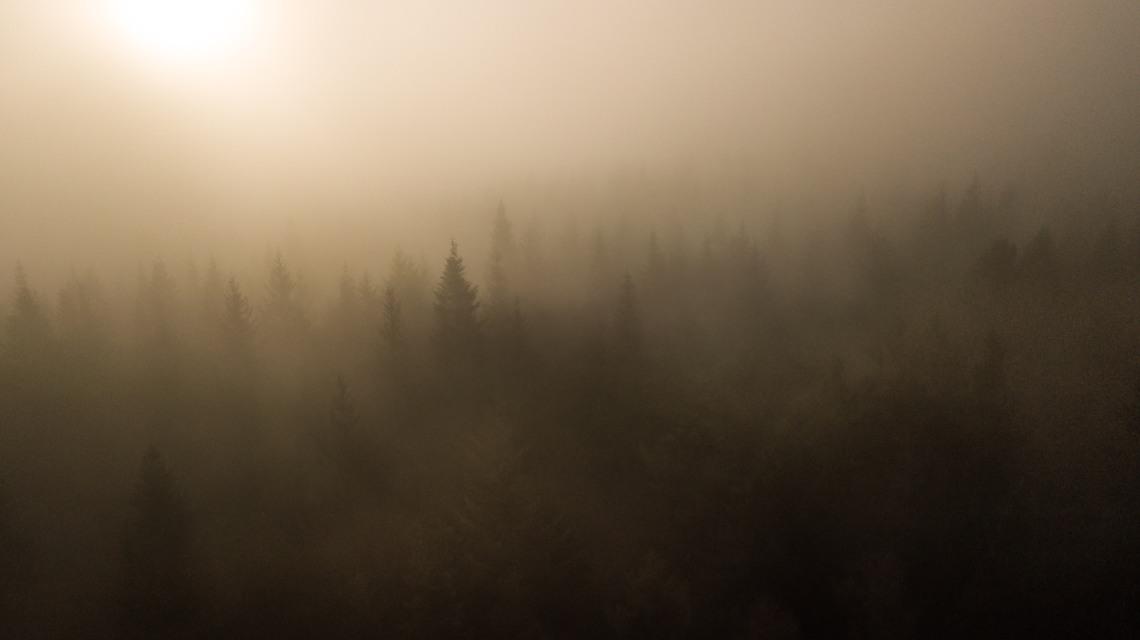 fog stroking treetops